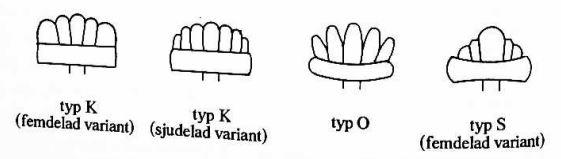 princip3-typy